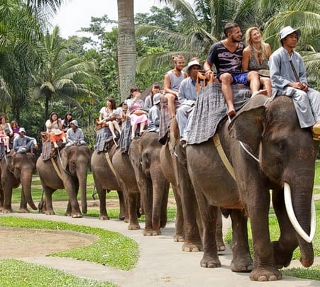 Mountain Cycling, Elephant Safari Ride and Rafting in Bali