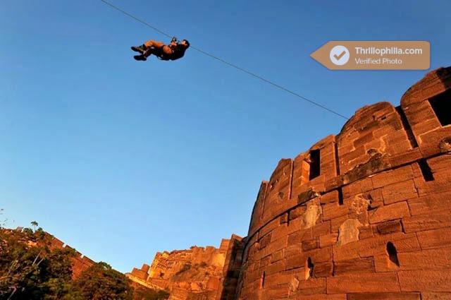 Jodhpur_flying_fox_(8).jpg