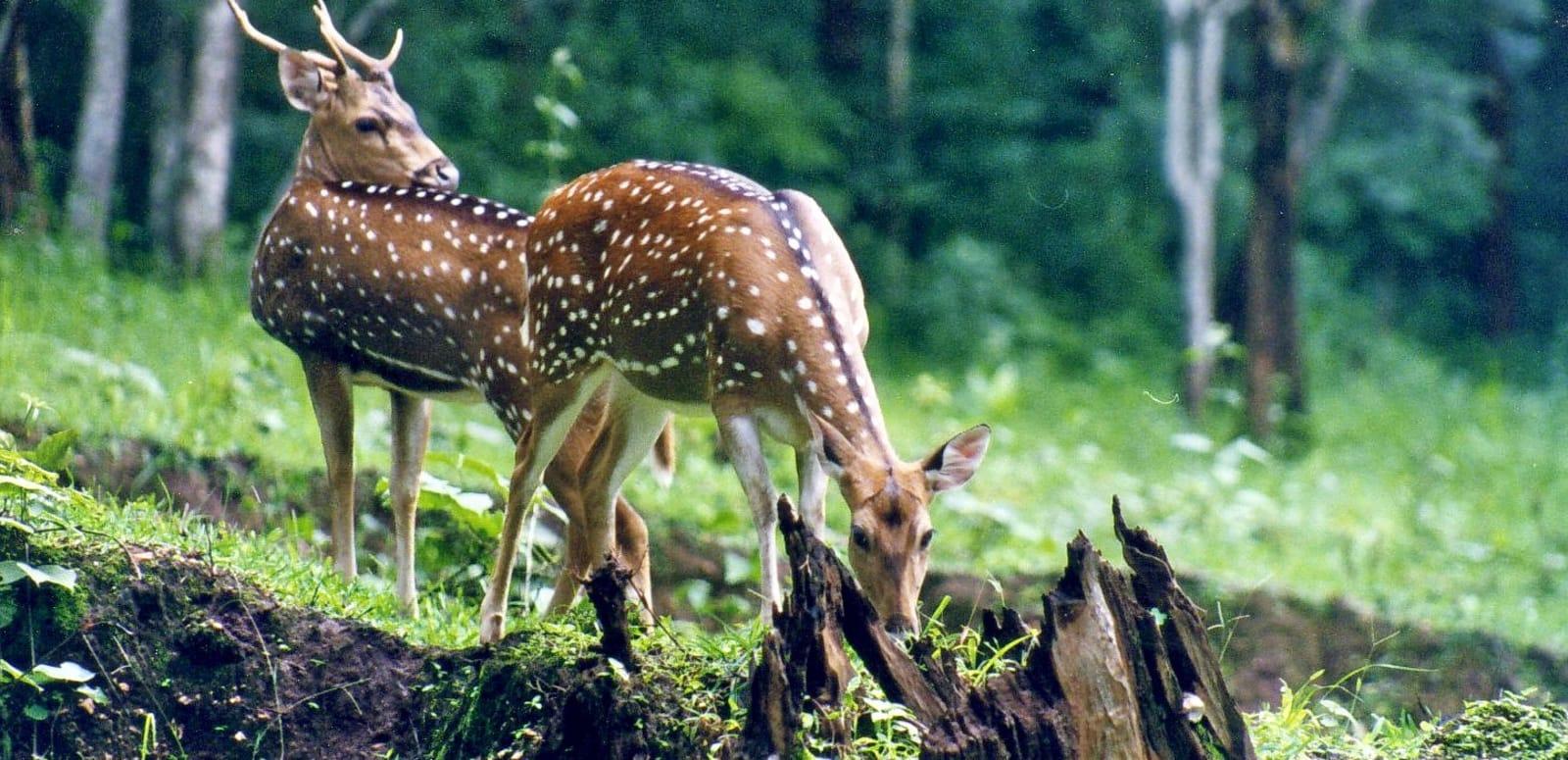 7 Best Wildlife Sanctuaries in GOA - 2019 (Photos & Reviews)