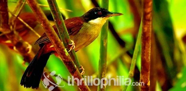 Birds-thattekkad-sanctuary-1_kerala.jpg