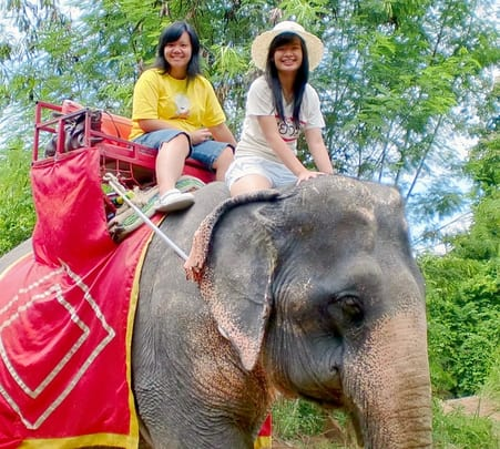 Elephant Trekking and Bamboo Rafting, Phuket Flat - 25% off