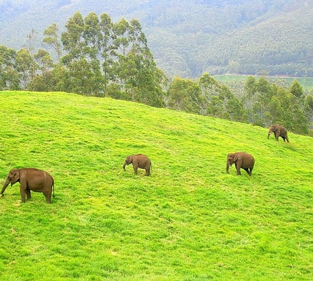 Rent a Local Expert in Munnar