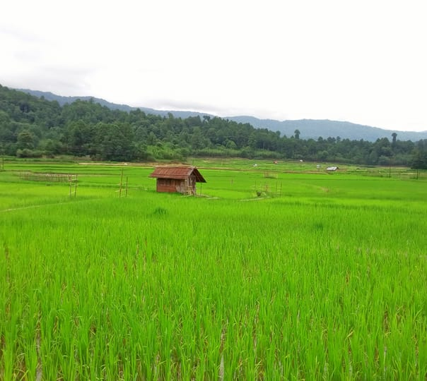 Sightseeing Tour of Palin- Nyapin- Sangram- Koloriang in Arunachal Pradesh