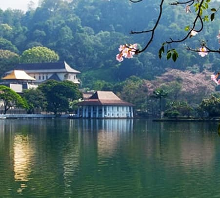Day Tour to Pinnawala, Peradeniya and Kandy from Colombo