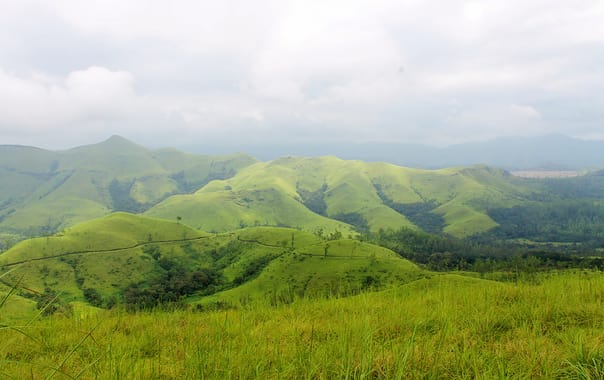 Shola_grassland_in_kudremukh_national_park.jpg