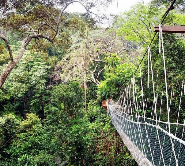 Rainforest Taman Negara Tour in Kuala Lumpur