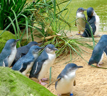 Phillip Island Tour with Penguin Parade Flat 15% off