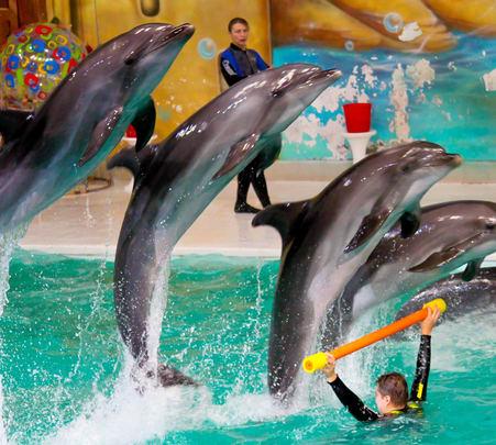 Dubai Dolphinarium Greek Show