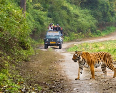Resort Stay with Jungle Safari in Jim Corbett