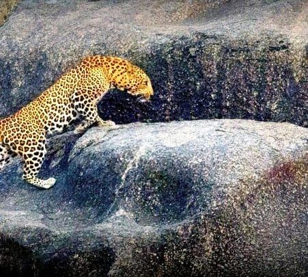 Leopard Spotting Tour in Bera, Rajasthan