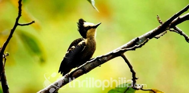 Birds-of-thattekkad-bird-sanctuary-3_kerala.jpg