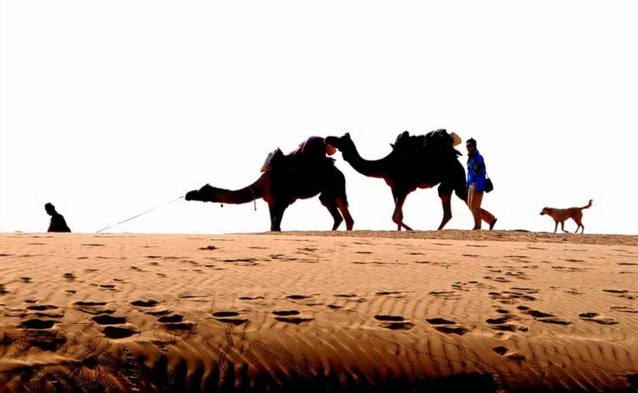 Dramatic sunset scenery on a camel safari located 5km from ...