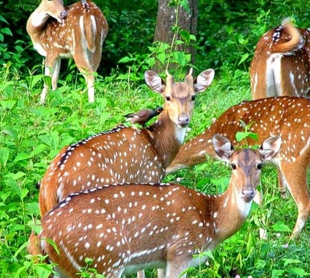 Parambikulam Wildlife Sanctuary Tour