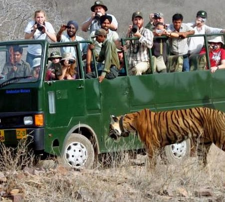 Canter Safari in Jim Corbett National Park