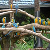 1464928861_ara_macaws_at_safari_world_-bangkok-8b.jpg