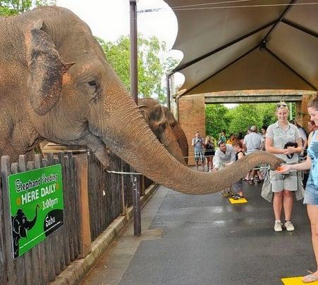 Visit to Australia Zoo in Brisbane