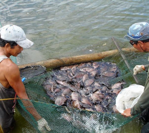 Crab Catching Trip at Sonaulim in Goa