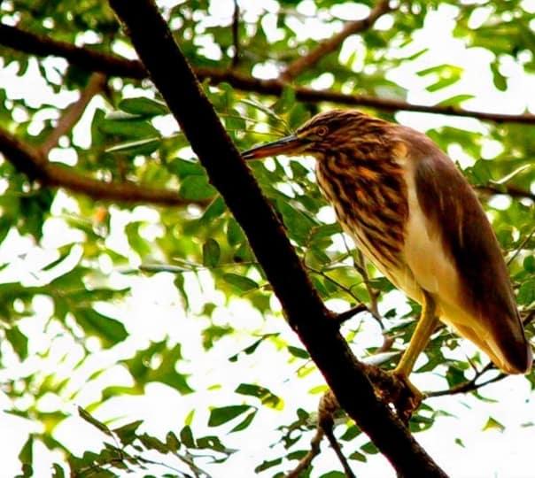 Thattekad Bird Sanctuary Salim Ali Bird Sanctuary
