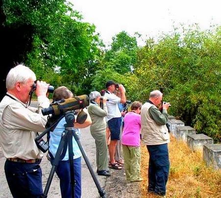 Bird Watching Experience in Munnar