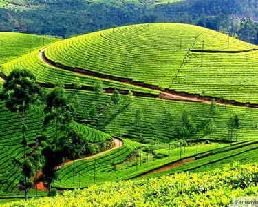 Full Day Sightseeing Tour of Ooty and Coonoor
