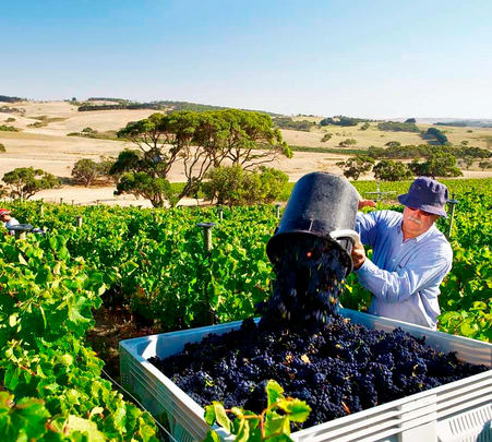 Harvest Wine Tour in New South Wales