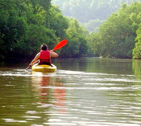 Backwater Kayaking at Sylvan Siridao in Goa