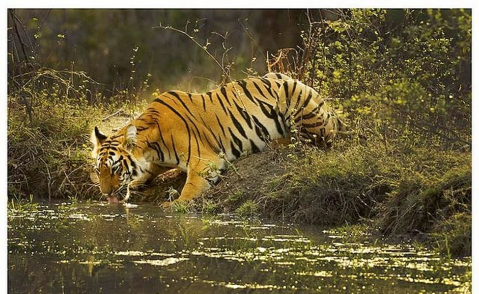 19 Best Tiger Reserves In India