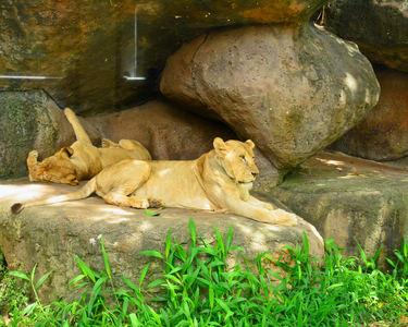 Bali Safari and Marine Park Tickets - Flat 20% off