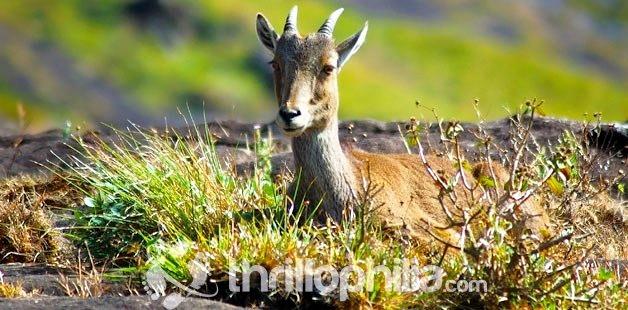 Wildlife-chinnar-kerala_(2).jpg