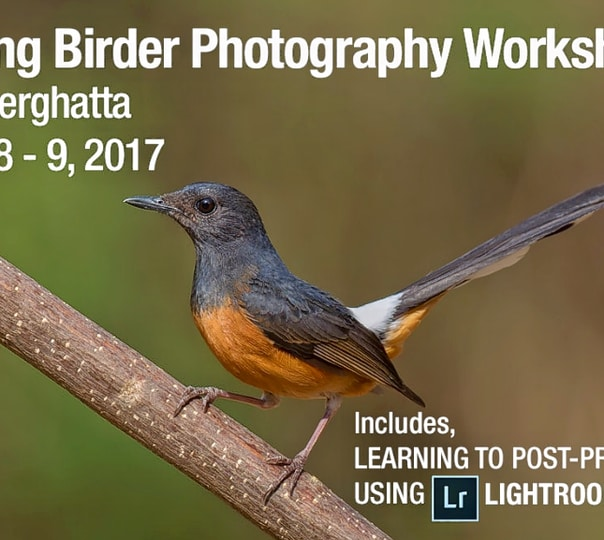 Young Birder - Bird Photography Workshop in Bannerghatta
