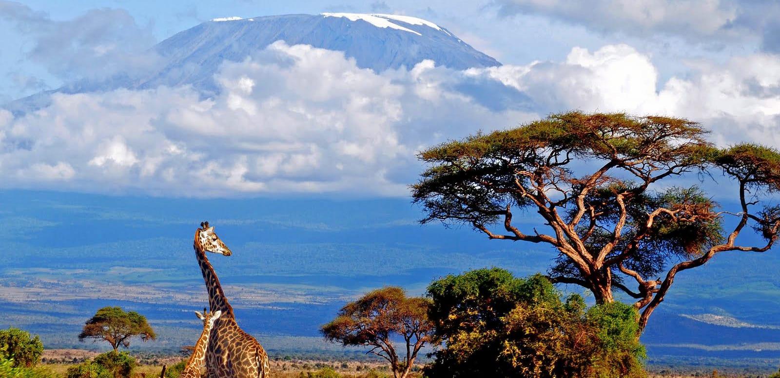 1574493548_tanzania_safari.jpg