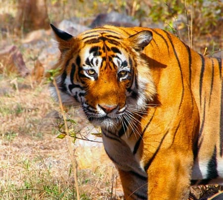 Rent a Guide in Ranthambore National Park