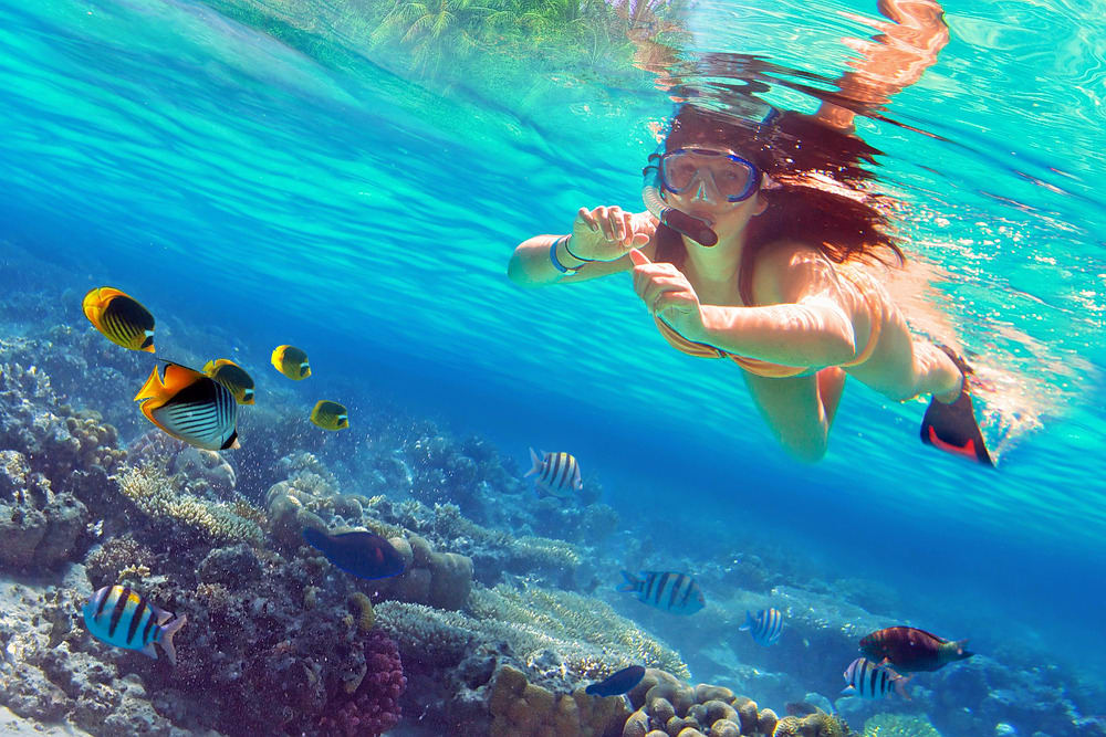 Go Snorkeling in Amed