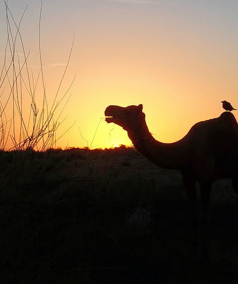 1529677455_thar_desert__nr._jaisalmer__rajasthan__india_(15823580219).jpg