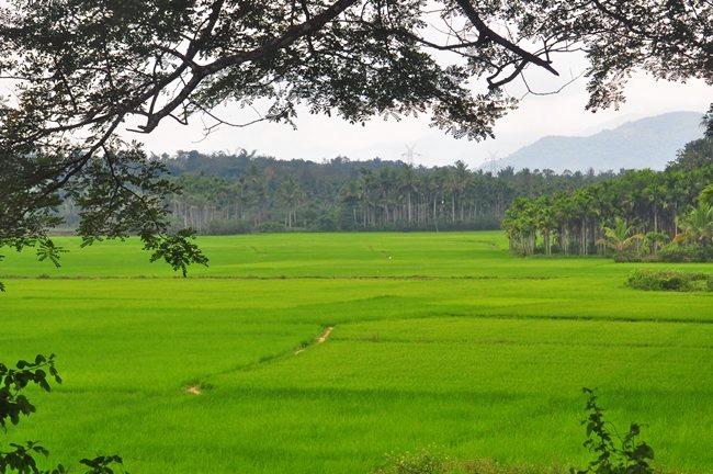 M_sulthan_bathery_ricefarm.jpg
