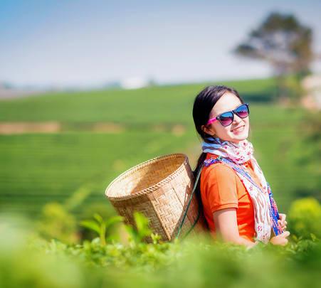Visit Chiang Rai Tea Plantations