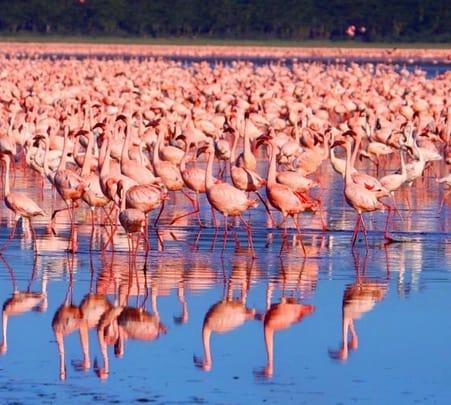 Visit the Lakes and Masai Mara Reserve in Nairobi