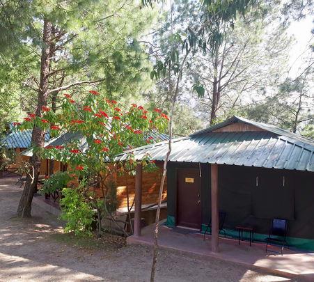 Camping Experience at Shoghi, Shimla