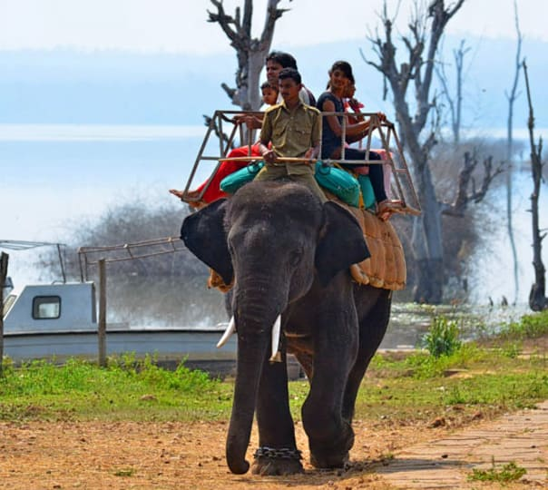 Night Stay at Sakrebyle Elephant Camp near Shimoga