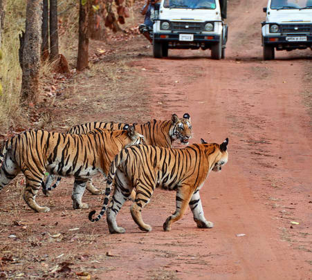 Jim Corbett Tour Package from Delhi