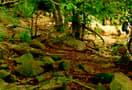 Chinnar_trekking-_livetheday_105.jpg