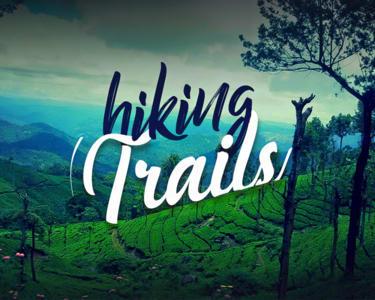 Trek to Top Station Munnar in Kurangani Hills