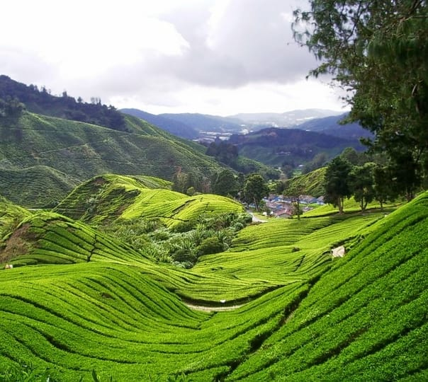 Visit to Cameron Highlands in Malaysia