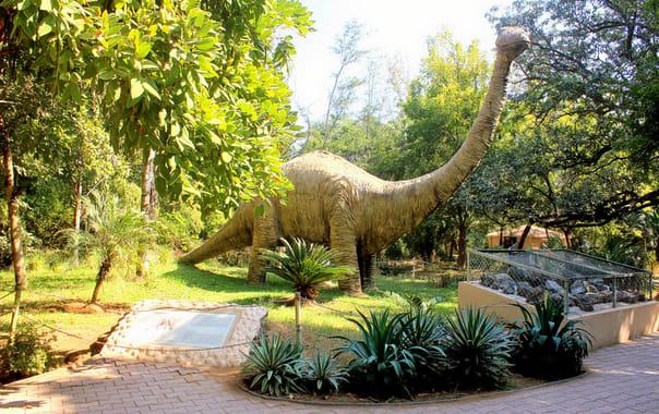 1548932039_shivali_fossil_park.jpg