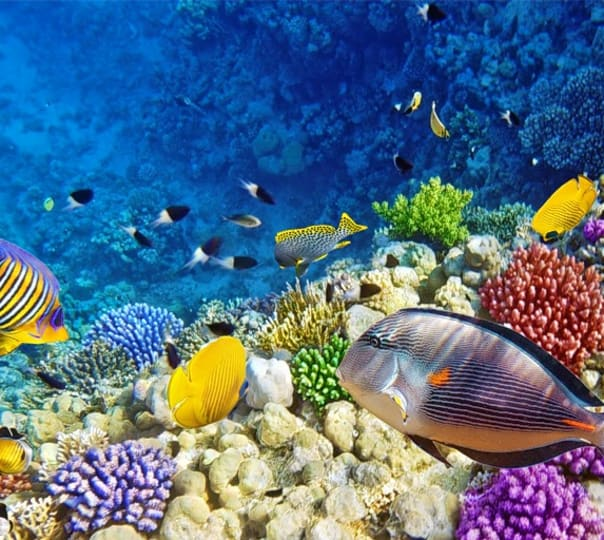 Scuba Diving Package in Maldives