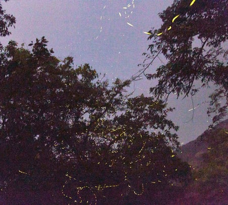 Fireflies and Sandhan Valley Trek