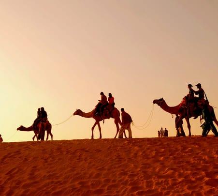 Half Day Sunrise Camel Safari in Jaisalmer