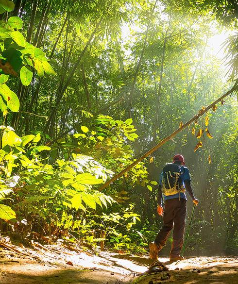 1539170891_jungle_trekking.jpg