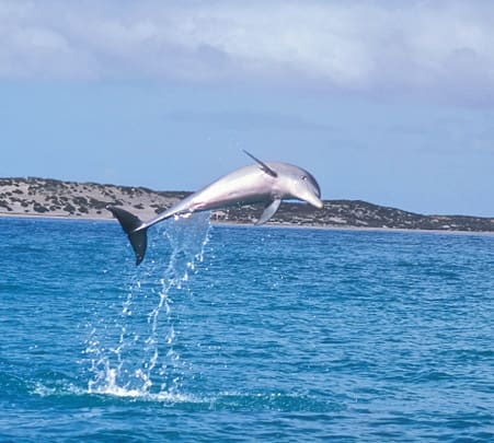 Mandurah Canals and Dolphin Watch Tour