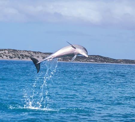 Mandurah Canals and Dolphin Watch Tour